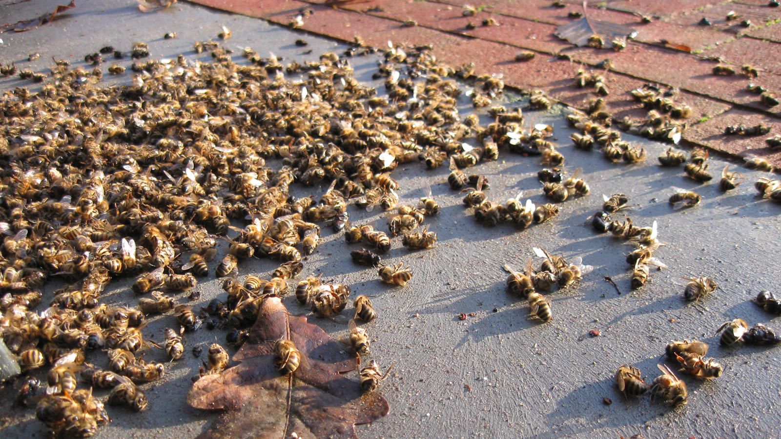 <h4>Neonics Are Deadly To Bees</h4><p>Neonics are at least 5,000 to 10,000 times more toxic to bees than DDT.</p>